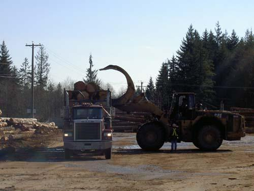 Unloading logs from the truck.
